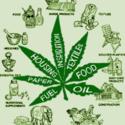 Daily Greens Marijuana Dispensary