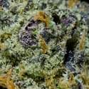 Mary's - Seattle Marijuana Dispensary
