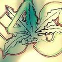 BUDS 4 US Marijuana Dispensary
