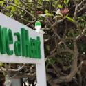 Have a Heart - Kauai Marijuana Dispensary