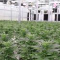 Liberty Health Sciences - Summerfield Marijuana Dispensary