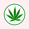 MJ Express-O - ABQ Marijuana Dispensary