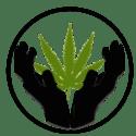Lifted Bud Marijuana Delivery Service