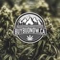 Buy Bud NOW Marijuana Delivery Service