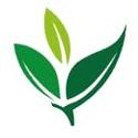 Green Zone Therapy Marijuana Doctor