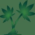 Oasis Healing Center (Coming Soon) Marijuana Dispensary