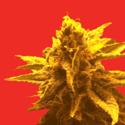 Superb Herb Company Marijuana Dispensary