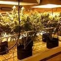Pacific NW Medical & Clone Universe Marijuana Dispensary