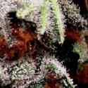 The HigherStone Marijuana Dispensary