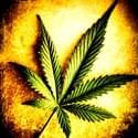 Funky Nugz Concierge Marijuana Dispensary