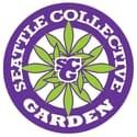 Seattle Collective Garden Marijuana Dispensary