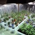 Weedid-it Collective Marijuana Dispensary