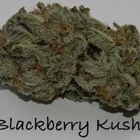 Black Berry Kush