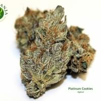 Indoor grown Platinum Cookies is a Cup-winning hybrid and cross of OG Kush, Durban Poison, and a third unknown strain. These small nug Platinum Cookies smells of sweet notes of berry and candy, followed by a fruity spiciness and helps members with severe