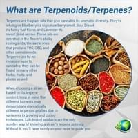 ps-infographic-what-are-terepnoids.jpg