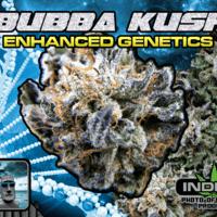 Paradise 420 - Marijuana Delivery - Huntington Beach - Bubba Kush.png