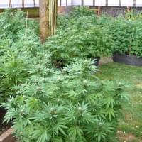 OMMP outdoor garden
