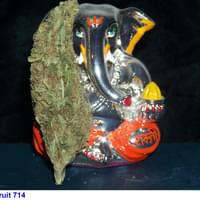 Juicy Fruit 714
