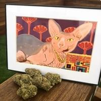 Inked Egyptian Sphynx by Kia Green