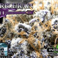Paradise 420 - Marijuana Delivery - Huntington Beach - Purple Rain.png
