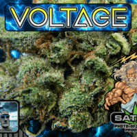 Paradise 420 - Marijuana Delivery - Huntington Beach - Voltage.png