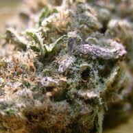 Blueberry K