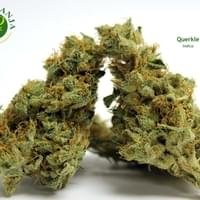 Querkle is a cross between Purple Urkle and Space Queen that carries a strong grape and berry aroma. Ouerkle is a unique strain and helps members with stress, pain, and depression.