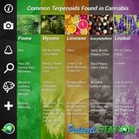 ps-infographic-common-terepnoids.jpg