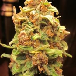 Lionheart Healing Collective Marijuana Dispensary