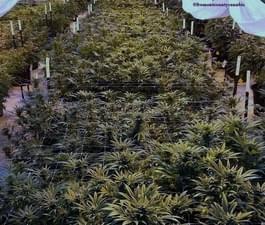 All Organic Living Soil!!
