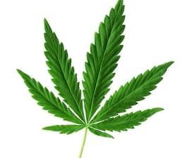 weed leaf 1.jpg
