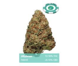 Jillybean (Hybrid)