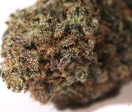 Purple Frost - As seen in High Times Jan, 2011.