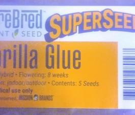gorilla glue 2