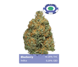 Blueberry (Indica)