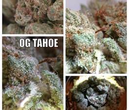 O.G. Tahoe