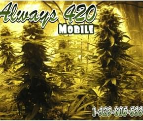 Photo from Always 420 Mobile