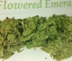 Photo from The Flowered Emerald
