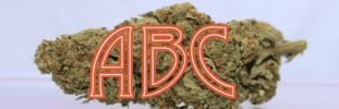 ABC (Alpha Bud Connoisseurs)