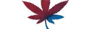Envie Cannabis Boutique