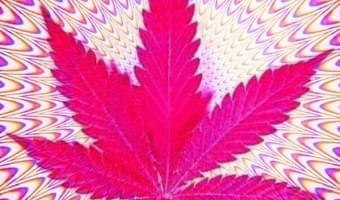 Yippie Hippie Cannabis
