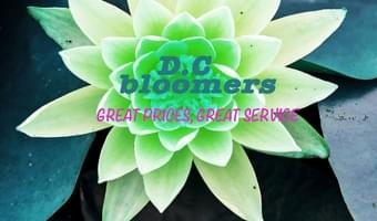 D.C. Bloomers