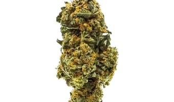 Cannabisy