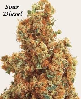 on the coast pa photos costa mesa marijuana dispensaries
