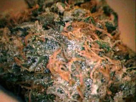 Flower Power Botanicals Photos Fort Collins Marijuana