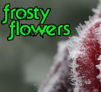 frosty flowers collective
