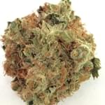 Chem Dawg from Herbs4You in Denver