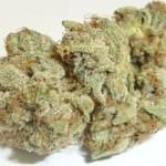 Og #18 from Cali Budz Delivery - 24/7 in North Hollywood