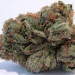 OG Kush from 420 Delivery Club in Rancho Santa Fe