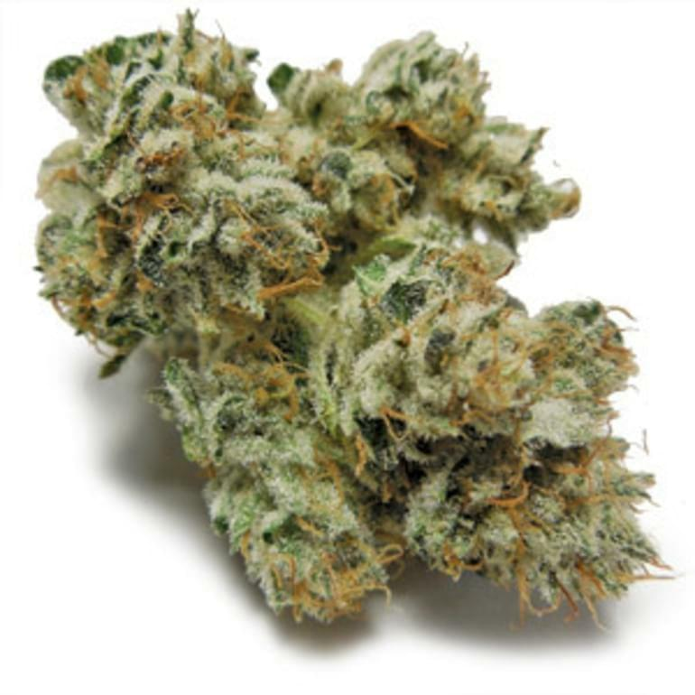 Gorilla Glue #4 Strain Information & Reviews | Where's Weed